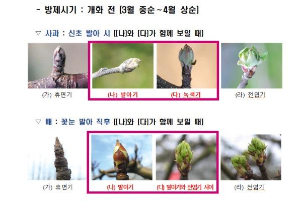 김천시, 과수화상병 적기방제가 중요-기술지원과(사진).jpg