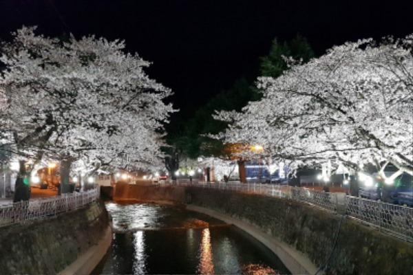 직지사 벚꽃길 경관조명 점등-도로철도과(사진2).jpg