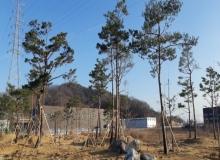 [김천] 그린뉴딜 정책과 연계한 미세먼지 차단숲 조성